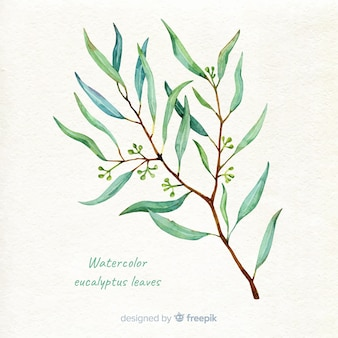 Fond de branche d'eucalyptus dessinés à la main