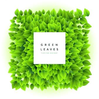 Fond de cadre de belles feuilles vertes bouquet