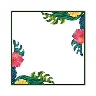 Fond de cadre carré fleurs nature