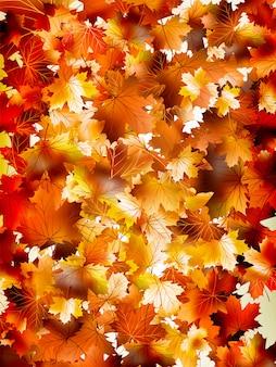 Fond coloré de feuilles d'automne.