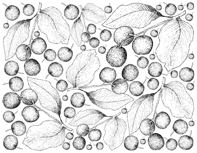 Fond d'écran d'illustration de fruits tropicaux de croquis dessinés à la main