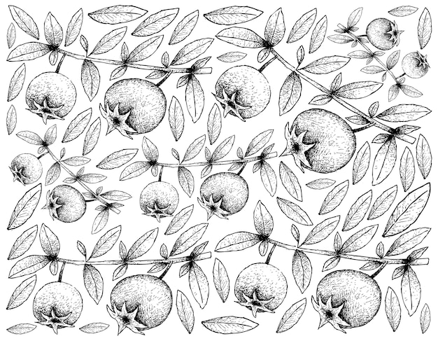 Fond d'écran d'illustration de fruits tropicaux de croquis dessinés à la main