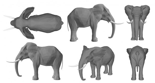 Fond d'éléphant 3d