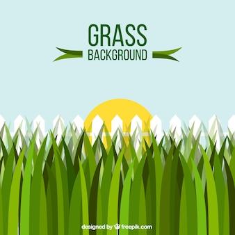 Fond fantastique avec de l'herbe, une clôture et le soleil