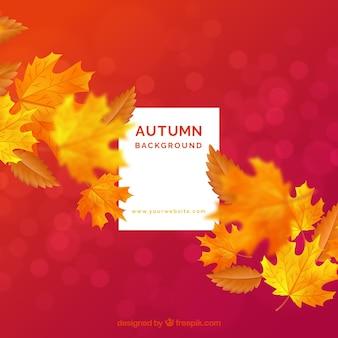 Fond avec feuille d'automne