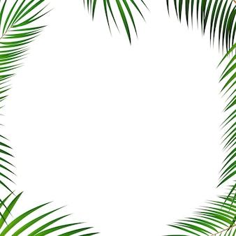Fond de feuille de palmier