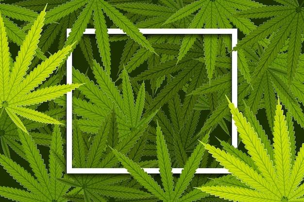 Fond de feuilles de cannabis botanique