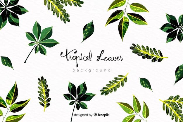 Fond de feuilles exotiques dessinés à la main