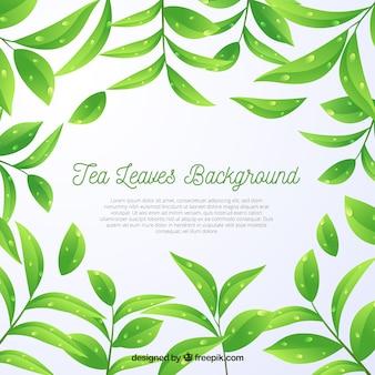 Fond de feuilles de thé dans un style réaliste
