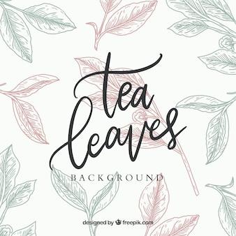Fond de feuilles de thé dessinés à la main