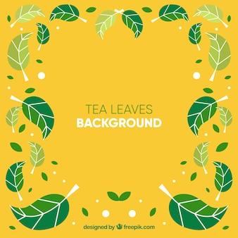 Fond de feuilles de thé avec différentes plantes