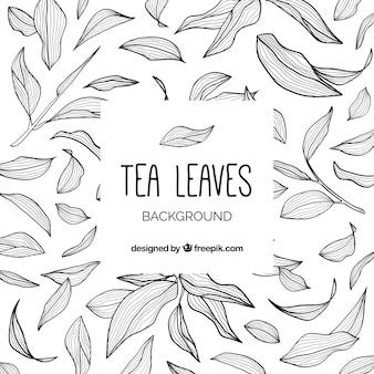 Fond de feuilles de thé avec style dessiné à la main