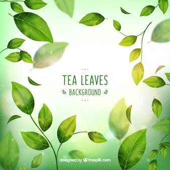 Fond de feuilles de thé avec un style réaliste
