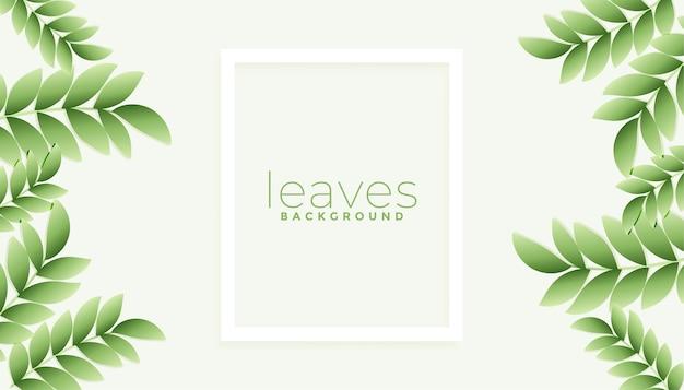 Fond de feuilles vertes naturelles avec espace de texte