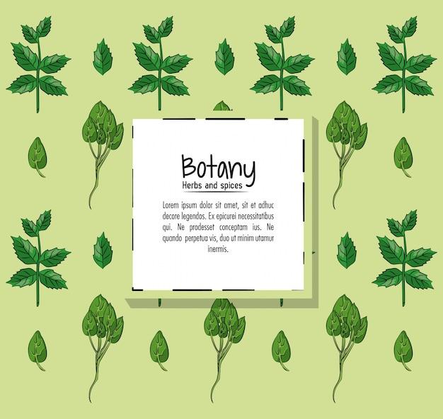 Fond de fines herbes et épices de botanique
