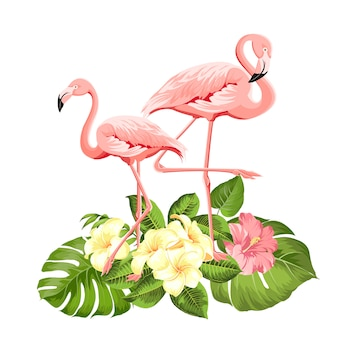 Fond de flamant rose
