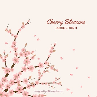 Fond de fleur de cerisier dans un style plat