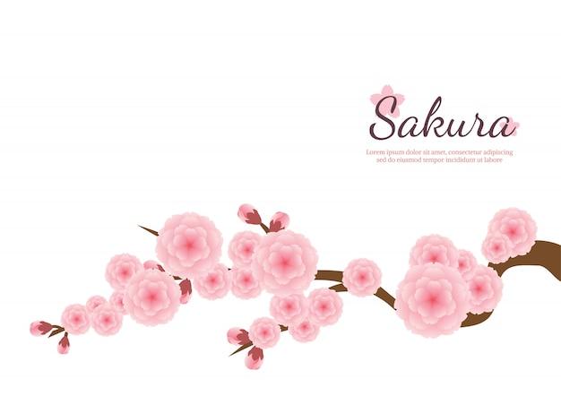 Fond de fleurs de cerisiers en fleurs. sakura fleurs roses.