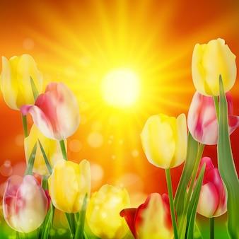 Fond floral. paysage au coucher du soleil.