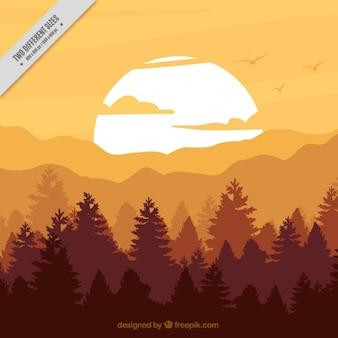 Fond de la forêt au coucher du soleil dans des tons bruns
