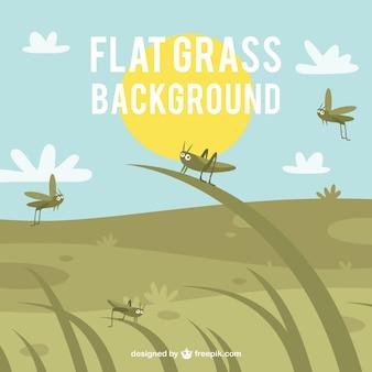 Fond d'herbe plat avec grillons