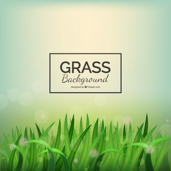 Fond d'herbe réaliste avec effet bokeh