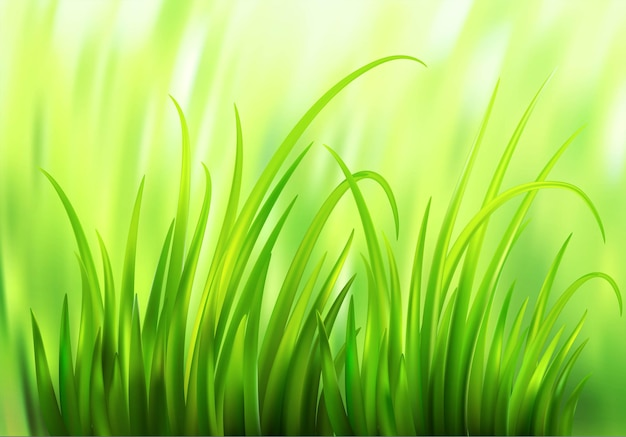 Fond d'herbe verte frash spring. illustration