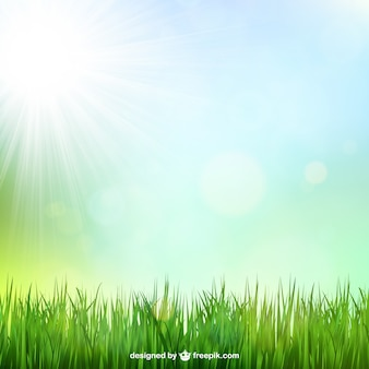 Fond d'herbe verte avec le soleil