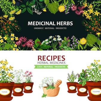 Fond d'herbes médicinales