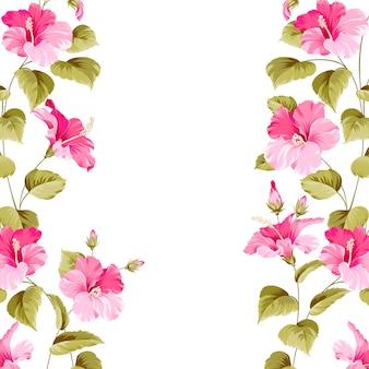 Fond d'hibiscus en fleurs