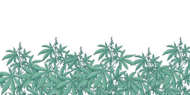 Fond de jardin de cannabis
