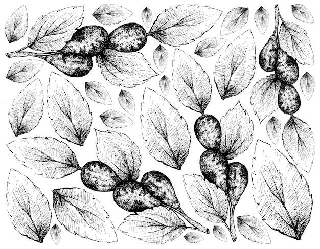 Fond de jujube ou lang fruits dessinés à la main