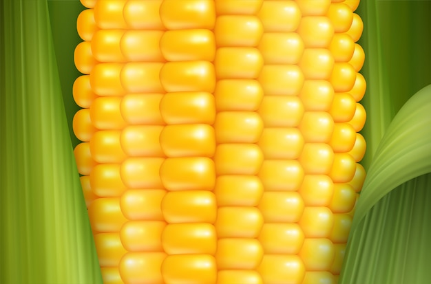 Fond de maïs réaliste