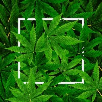 Fond de marijuana ou de feuille de cannabis. illustration réaliste de la plante en vue de dessus.