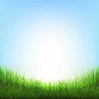 Fond de nature avec de l'herbe
