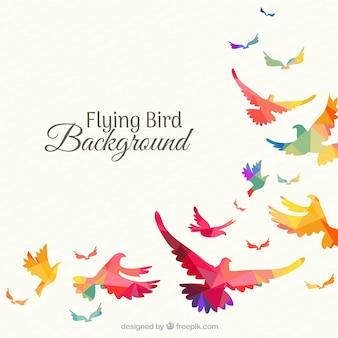 Fond avec des oiseaux colorés