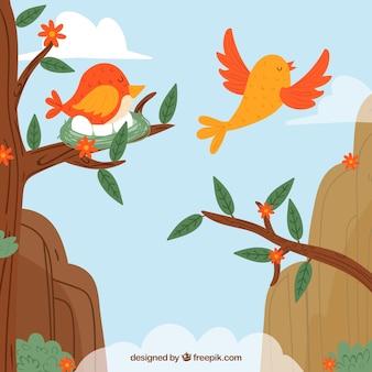 Fond avec des oiseaux dans les montagnes