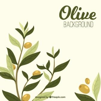 Fond d'olive avec des feuilles dans des tons verts