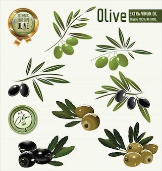 Fond d'olive