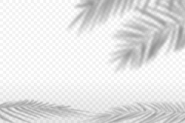 Fond avec l'ombre d'un palmier.