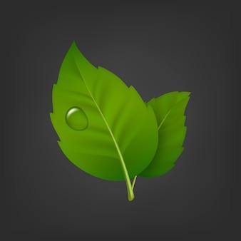 Fond avec paire de feuilles vertes et goutte de rosée. icône réaliste, modèle en.