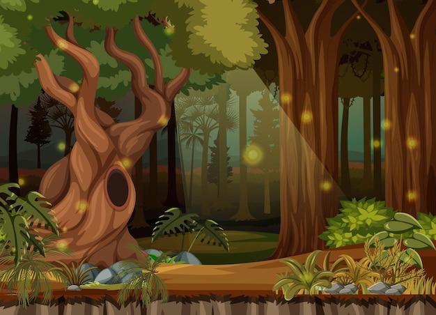Fond de paysage de forêt enchantée
