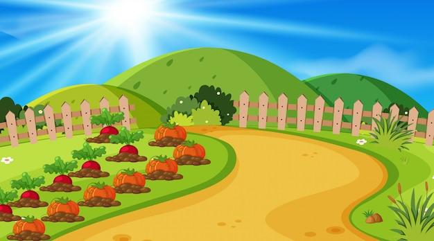 Fond de paysage avec des légumes dans le jardin