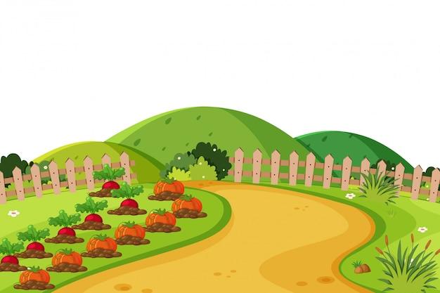 Fond de paysage avec des légumes sur des terres agricoles