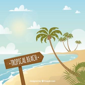 Fond de plage tropicale avec palmiers