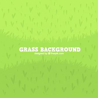 Fond plat d'herbe verte