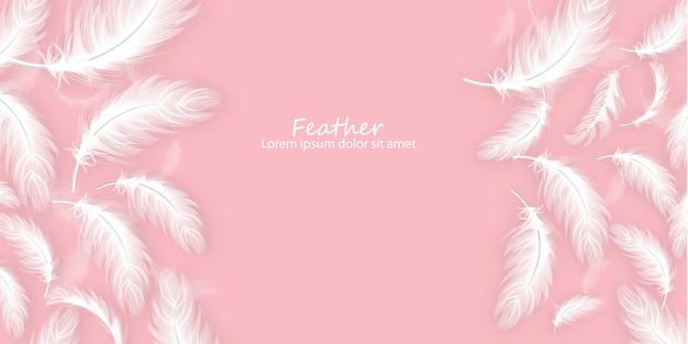 Fond de plumes
