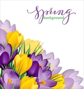 Fond de printemps avec des fleurs de printemps en fleurs, des crocus. illustration vectorielle