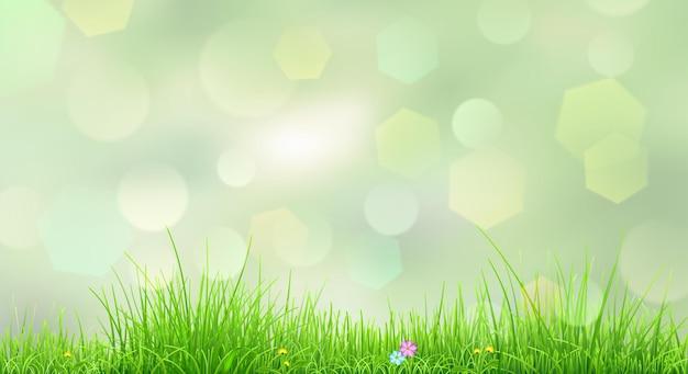 Fond de printemps avec de l'herbe verte et des fleurs