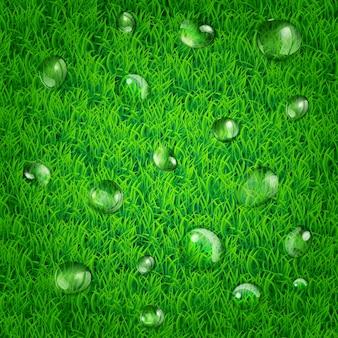 Fond de printemps nature avec de l'herbe et des gouttes d'eau